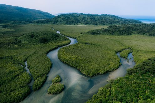 Mangrove forest, Japan off-the-beaten-path drone photography by Ippei and Janine
