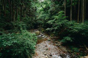 Hiking day trip to Tokyo's forest, Okutama