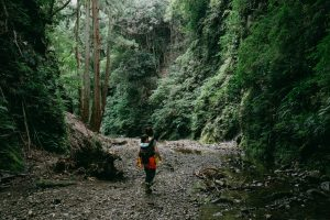Forest river hiking day trip from Tokyo