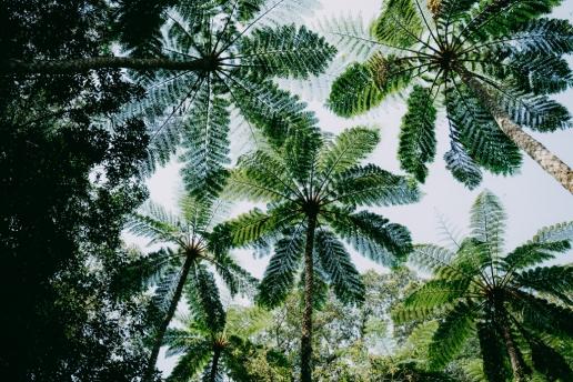 Virgin rainforest jungle of Amami Oshima Island, Japan