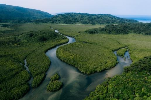 Mangrove river, Iriomote Island, Okinawa, Japan