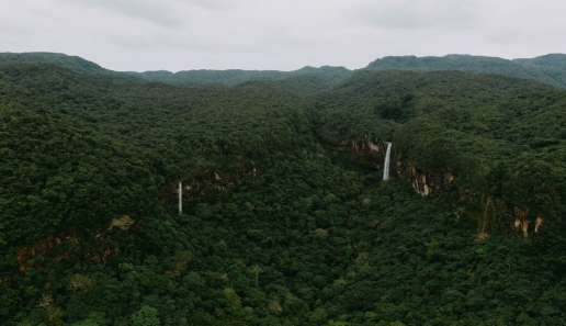 Tropical rainforest of Japan, Iriomote Island