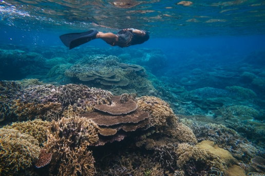 Snorkeling on healthy coral reef of Iriomote Island, Okinawa, Japan