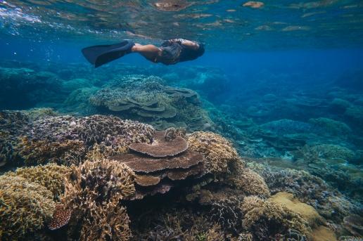 Snorkeling on healthy coral reef of Iriomote Island, Okinawa, Japan
