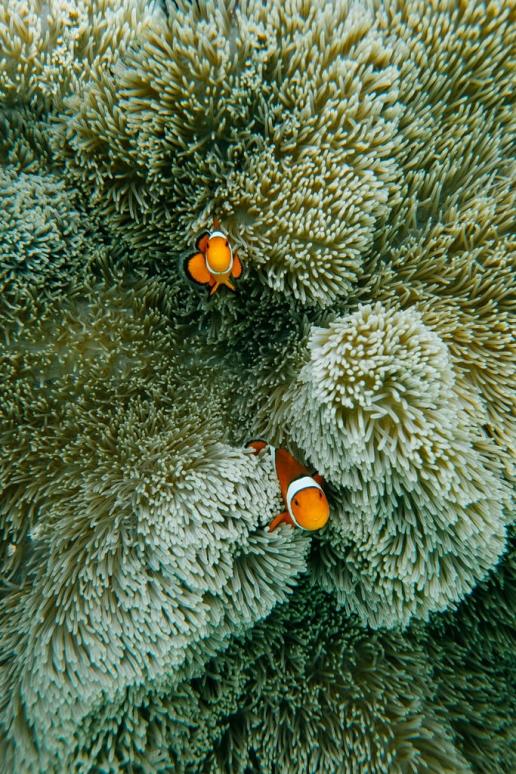 Snorkeling with Nemo, Miyako Island, Okinawa, Japan
