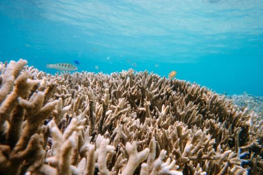 Healthy coral reef near beach, Miyako Island, Okinawa, Japan