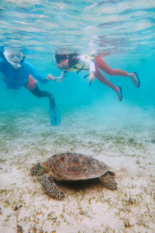 Snorkeling with sea turtles, Miyakojima, Okinawa, Japan