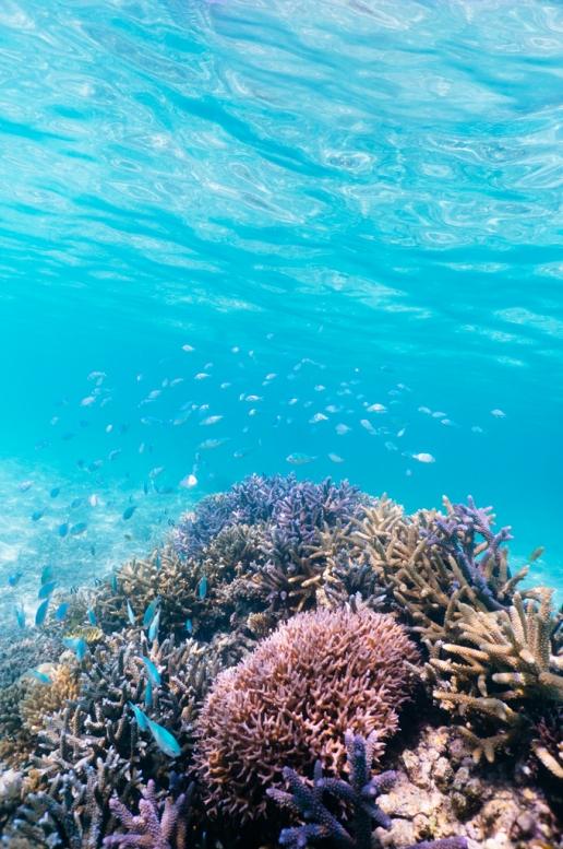 Tropical Japan snorkeling, Ishigaki Island, Okinawa