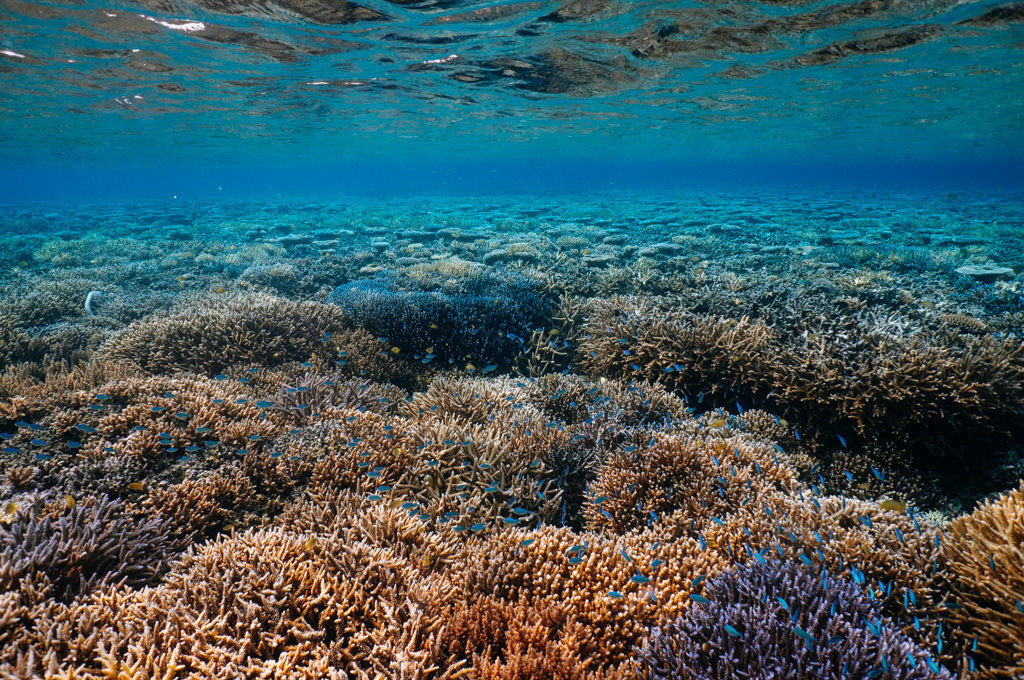 Healthy coral reefs of Iriomote Island, Okinawa, Japan