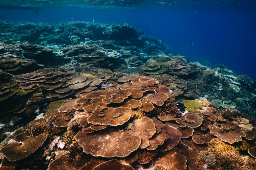 Healthy pristine coral reef of Japan, Iriomote of Yaeyama Islands, Okinawa