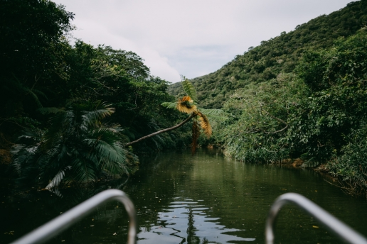 Mangrove river cruise on Iriomote Island, Okinawa, Japan