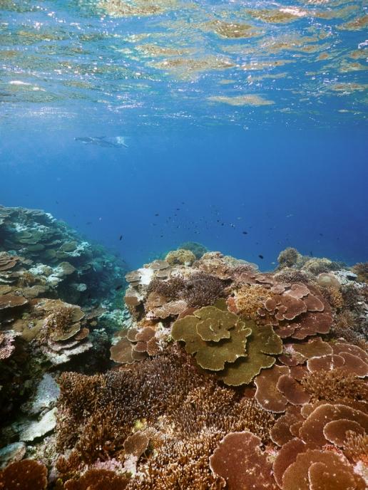 Pristine coral reef of Japan, Iriomote Island, Okinawa
