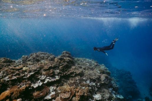 Iriomote coral reef snorkeling in winter, Okinawa, Japan