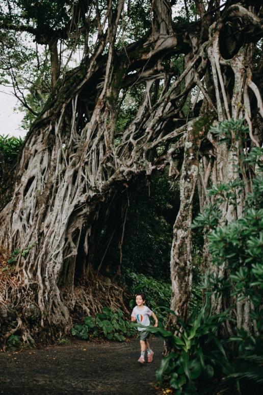 Banyan tree, Yakushima Island, Kagoshima, Japan