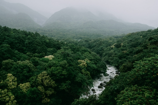 Yakushima evergreen forest, Japan