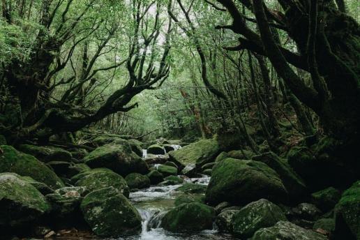 Shiratani Unsui Gorge hike, Yakushima, Japan