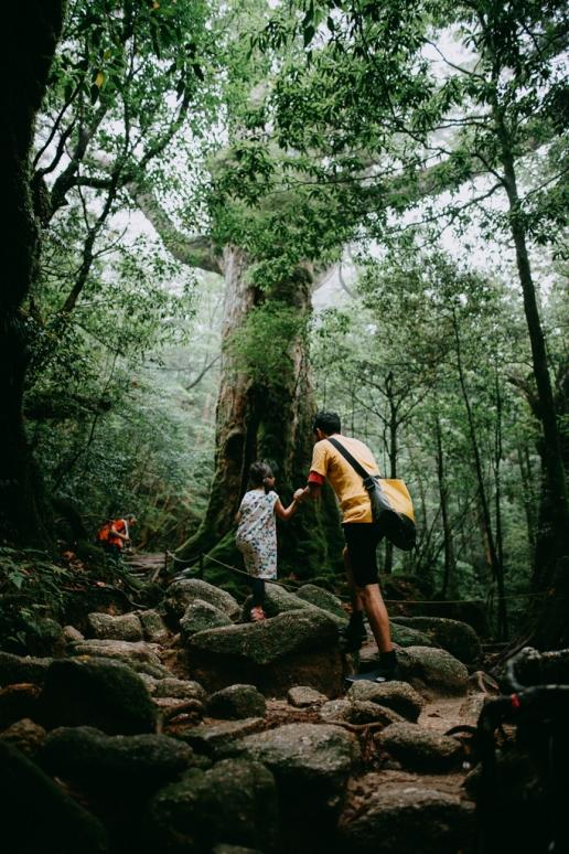 Shiratani Unsui Gorge hiking, Yakushima, Japan