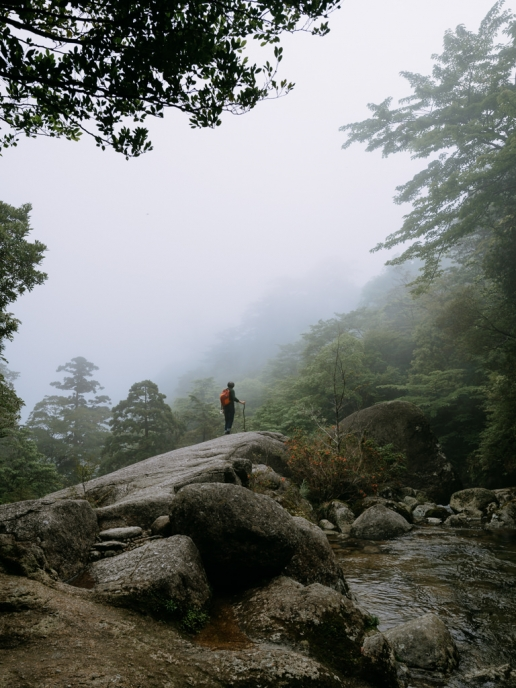 Yakushima hiking in mist, Japan