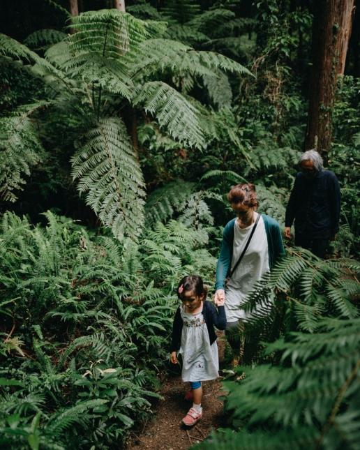 Hiking in Yakushima's rainforest, Japan