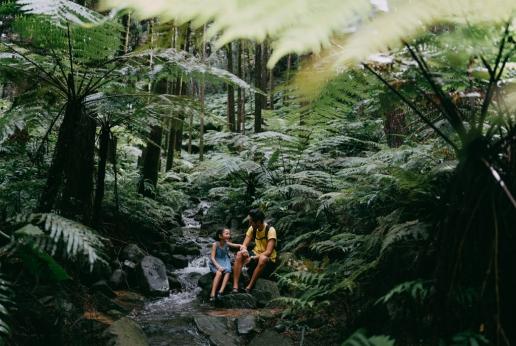 Rainforest hike on Tanegashima Island, Kagoshima, Japan