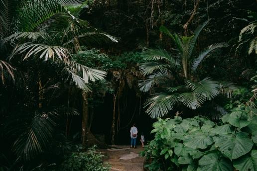 Japanese jungle cave, Amami Gunto National Park, Kagoshima