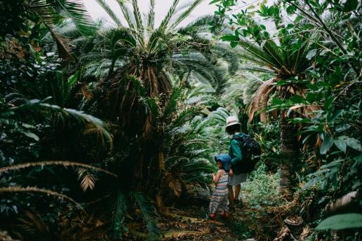 Jungle of Japanese sago palms, Okinoerabu, Amami Islands, Kagoshima