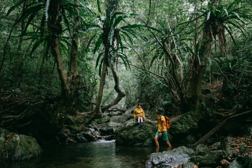 Subtropical rainforest of Amami Oshima Island, Kagoshima, Japan