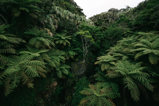 Tokyo island jungle, Hachijo-jima, Izu Seven Islands, Japan