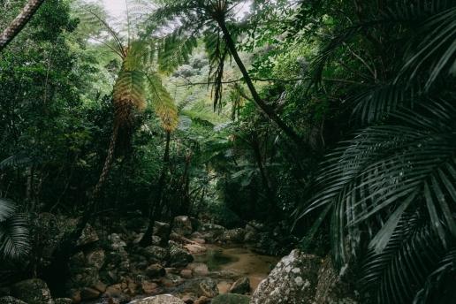 Tropical Japan's jungle with tree ferns, Ishigaki Island, Okinawa