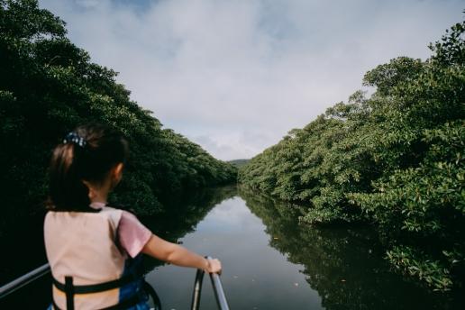 Mangrove river on Iriomote Island, Okinawa, Japan