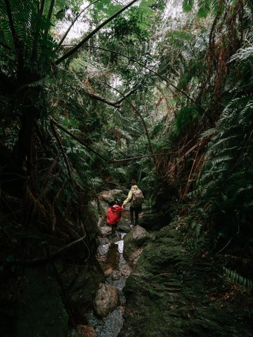 Okinawa winter hiking in jungle, Japan