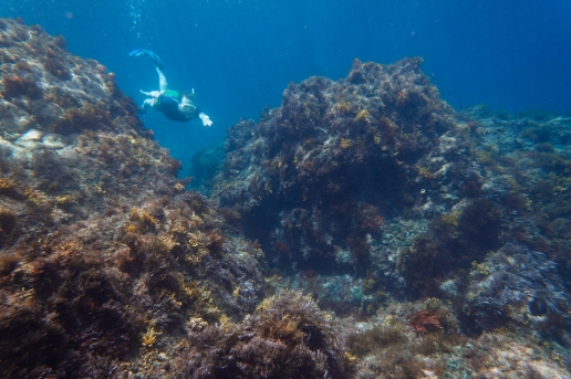 Snorkeling in clear water of Shikine-jima of Izu Seven Islands, Tokyo