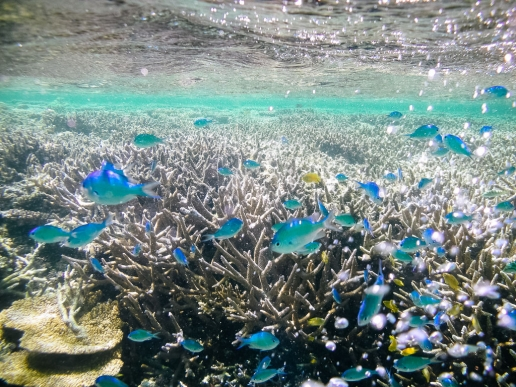 Tropical Japan's underwater with coral reef and colorful fish, Hatoma Island, Okinawa