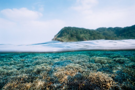 Healthy coral reef of Iriomote Island, Okinawa, Japan