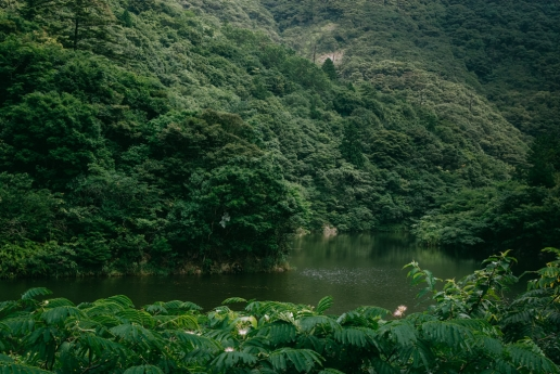 Lush green forest river of Nishinoshima of Okinoshima Islands, Shimane, Japan