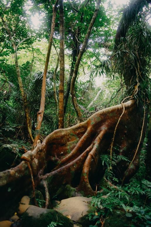 Jungle hiking on Iriomote Island, Okinawa, Japan