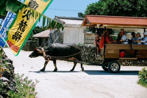 Water buffalo taxi on Taketomi Island of the Yaeyama Islands, Okinawa, Japan