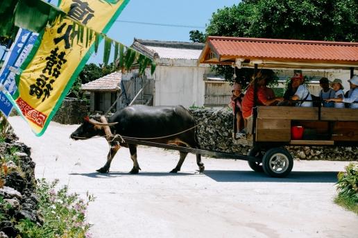 Water buffalo taxi on Taketomi Island of the Yaeyama Islands, Okinawa, Japan