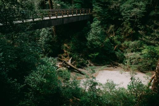 Lush green rainforest of Yakushima, Kagoshima, Japan