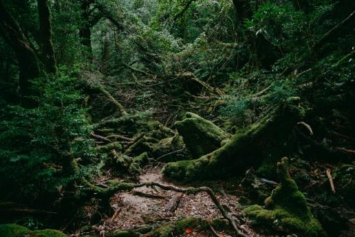 Mossy forest of Yakushima, Kagoshima, Japan