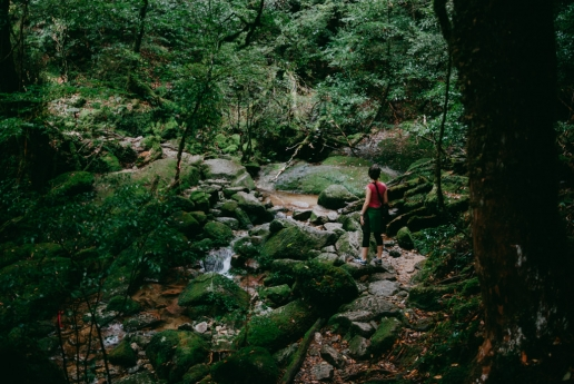 Hiking in Yakushima forest, Kagoshima, Japan