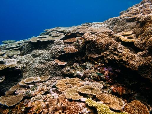Colorful Japanese coral reef in clear tropical water, Miyako-jima Island, Okinawa