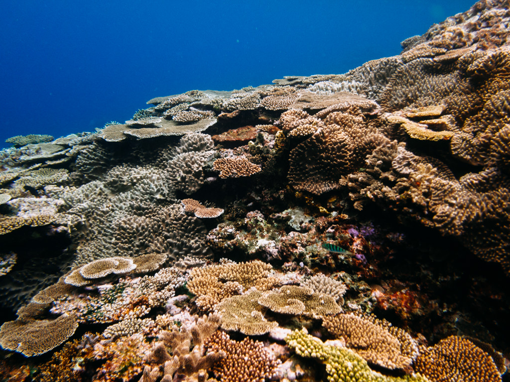 Colorful Japanese coral reef in clear tropical water, Miyako-jima Island, Okinawa