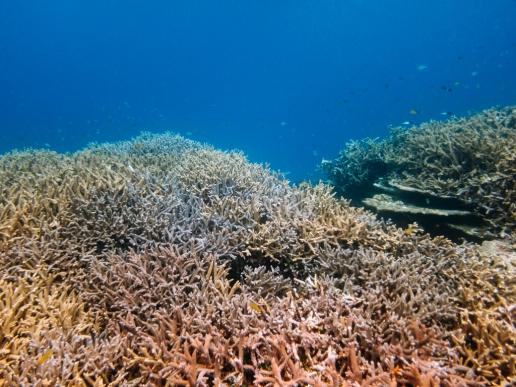 Pristine coral reef of Tropical Japan, Miyako-jima Island, Okinawa