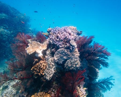 Snorkeling in Sekisei Lagoon of the Yaeyama Islands, Okinawa, Japan