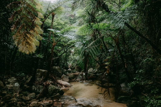 Tropical Japan's jungle with tree ferns, Ishigaki Island, Okinawa