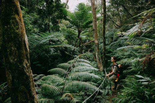 Okinawa rainforest hiking in winter