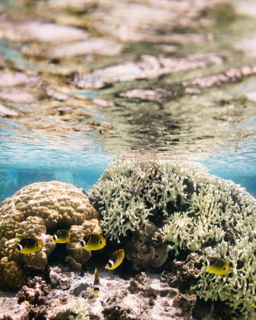 Coral lagoon with clear tropical water, Okinoerabu Island, Kagoshima, Japan