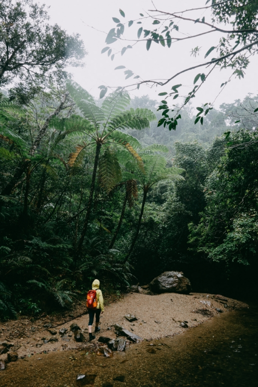 Okinawa Yanbaru rainforest in winter, Japan