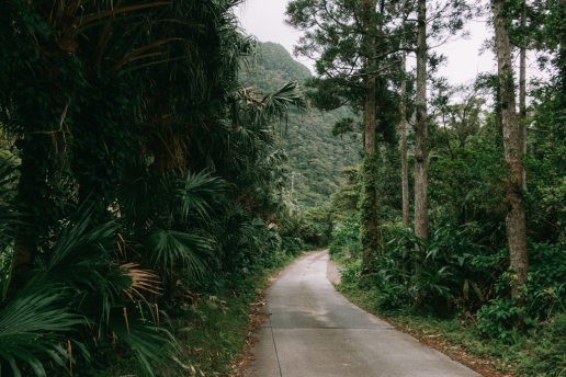 Road through subtropical forest inside the crater, Aogashima Island, Tokyo, Japan